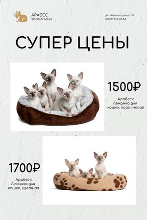 Pet Shop Offer with Cats Resting in Bed Pinterest – шаблон для дизайна