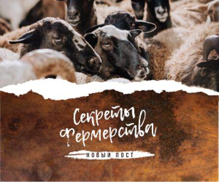 Farming Tips Cute Sheep Herd Medium Rectangle – шаблон для дизайна