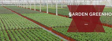 Farming plants in Greenhouse