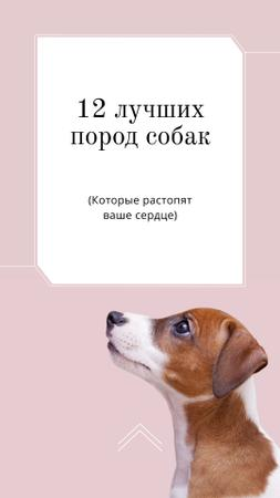 Adoption concept with Dog in pink Instagram Story – шаблон для дизайна