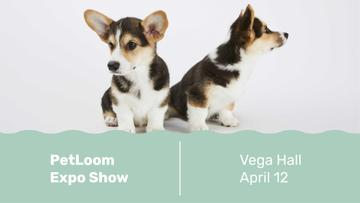 Dog show with cute Corgi Puppies
