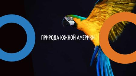 Exotic Birds Shop Ad with Flying Parrot Youtube – шаблон для дизайна