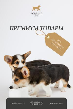 Dog Food Ad with Cute Corgi Puppies Pinterest – шаблон для дизайна