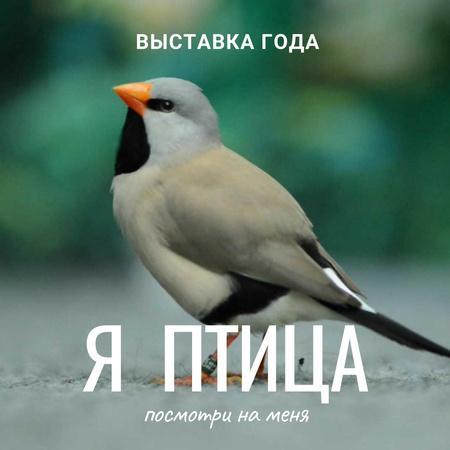 Cute shaft tailed finch bird Animated Post – шаблон для дизайна