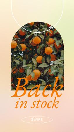 Modèle de visuel Fruits Offer with Oranges on Tree - Instagram Story
