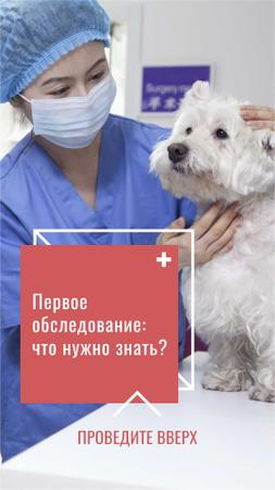 Veterinarian examining Dog in Hospital Instagram Story – шаблон для дизайна