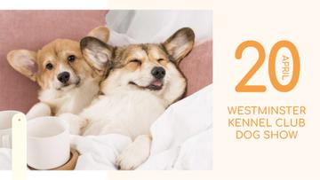 Pet show ad with cute Corgi Puppies