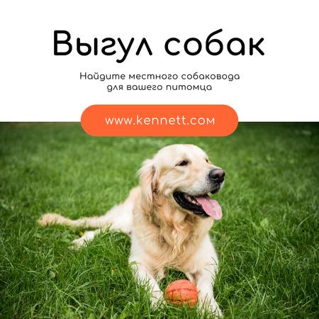 Dog Walking Services Golden Retriever on Grass Instagram – шаблон для дизайна