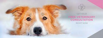 Free veterinary consultation Offer
