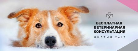 Free veterinary consultation Offer Facebook cover – шаблон для дизайна