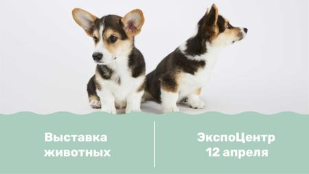 Dog show with cute Corgi Puppies FB event cover – шаблон для дизайна