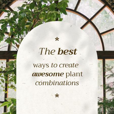 Modèle de visuel Plant Combinations with Beautiful House Tree - Instagram