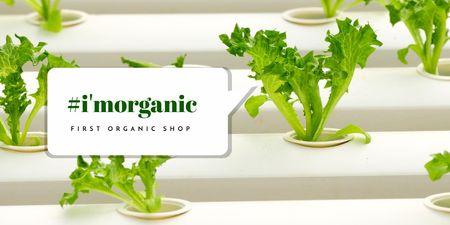 Organic Shop Offer with Green Leaves Twitter – шаблон для дизайну