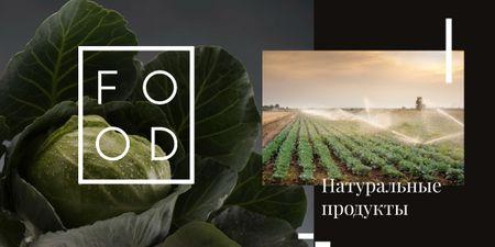 Green cabbage on farm field Image – шаблон для дизайна
