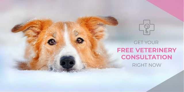 Free veterinary consultation with cute dog Twitterデザインテンプレート