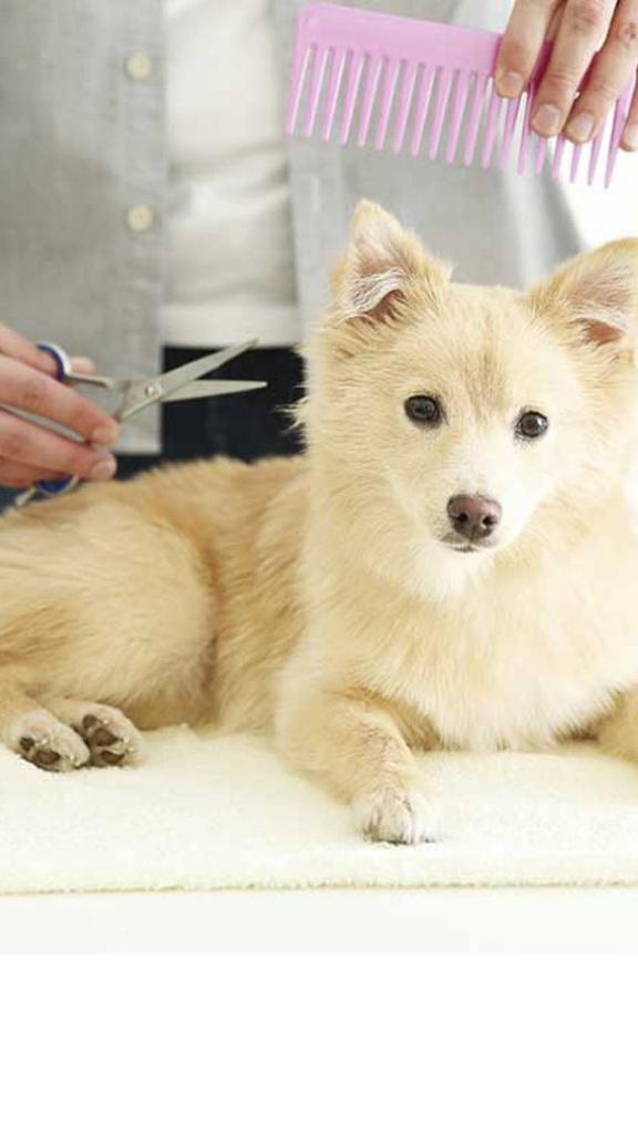 Cute Dog on Grooming procedure Instagram Story Design Template