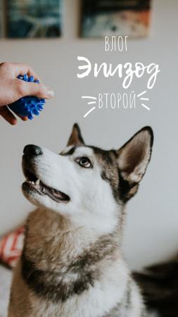 Pet Vlog Ad with Cute Dog Instagram Story – шаблон для дизайна