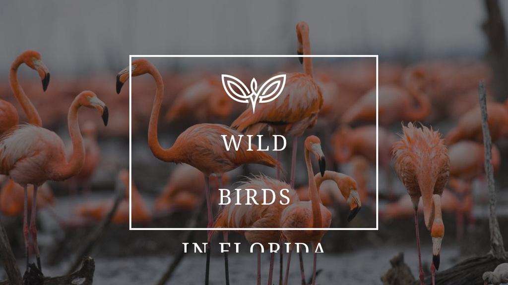Wild Flamingo Birds in Habitat Youtube Thumbnail Πρότυπο σχεδίασης