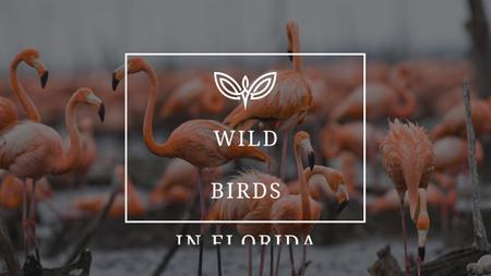 Ontwerpsjabloon van Youtube Thumbnail van Wild Flamingo Birds in Habitat