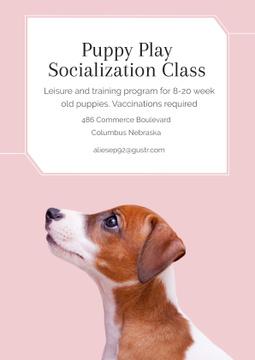 Puppy playing socialization class