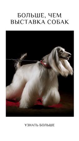 Dog Show Announcement Instagram Story – шаблон для дизайна