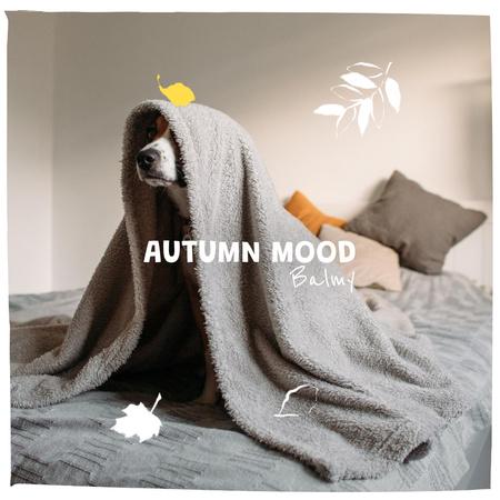 Autumn Mood with Funny Dog under Blanket Instagram – шаблон для дизайну