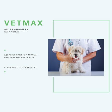 Veterinarian holding Puppy in Clinic Instagram – шаблон для дизайна