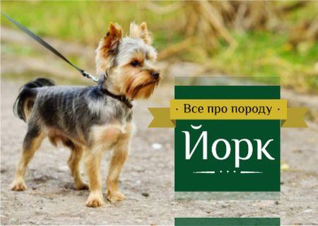 Adorable little Yorkshire Terrier  Card – шаблон для дизайна