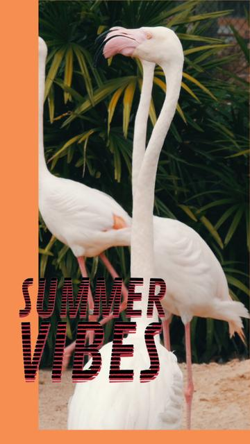 Summer Vibes with White Flamingos TikTok Video – шаблон для дизайна