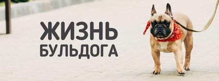 French Bulldog on street Facebook cover – шаблон для дизайна