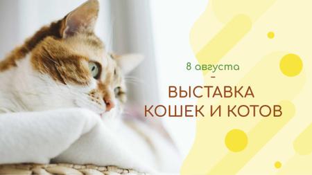Cat Day greeting FB event cover – шаблон для дизайна