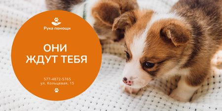 Animal Shelter Promotion with Cute Puppies Twitter – шаблон для дизайна