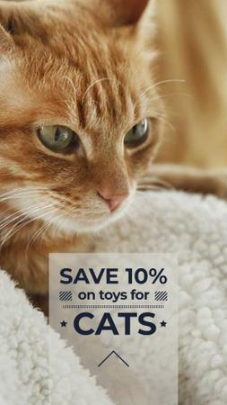 Toys for Cats Discount Offer Instagram Storyデザインテンプレート