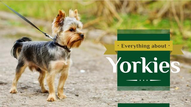 Yorkshire Terrier Dog on a Walk Youtube Thumbnail Modelo de Design