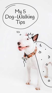 Bull Terrier for Dog Walking tips