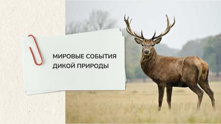 World wildlife events Announcement Youtube – шаблон для дизайна