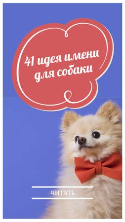 Name Ideas for Dogs Ad with Cute Puppy Instagram Story – шаблон для дизайна
