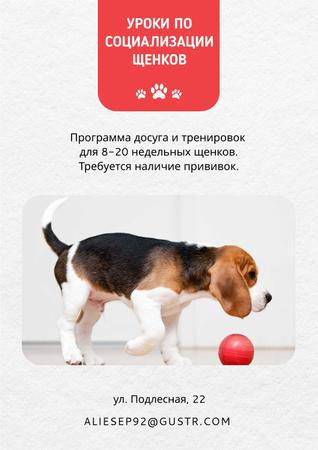 Puppy playing socialization class Poster – шаблон для дизайна