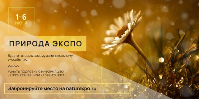 Nature Expo announcement Blooming Daisy Flower Image – шаблон для дизайна