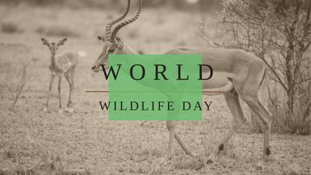 Ontwerpsjabloon van Youtube van World Wildlife Day with Antelope in Natural Habitat
