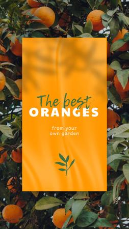 Modèle de visuel Fresh Oranges on Trees - Instagram Story