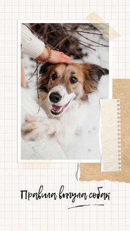 Funny Dog with owner Instagram Story – шаблон для дизайна