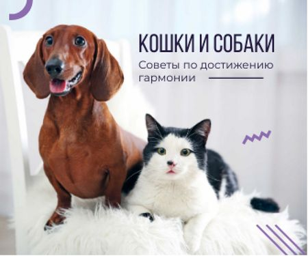 Tips for reaching harmony between cat and dog poster Large Rectangle – шаблон для дизайна