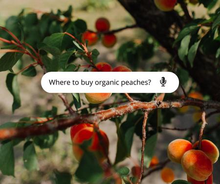 Ripe Peaches on Tree Facebook – шаблон для дизайна