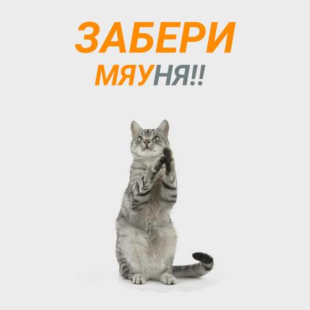 Cute grey cat playing Animated Post – шаблон для дизайна