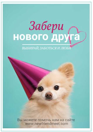 Pet Adoption Funny Fluffy Dog in Cap Poster – шаблон для дизайна