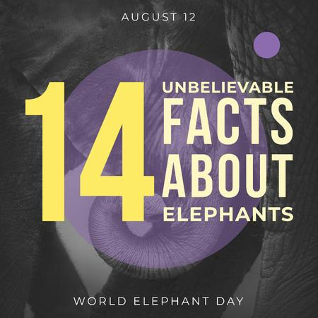 Modèle de visuel World elephants day Announcement - Instagram