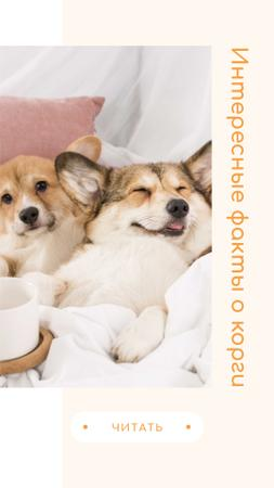 Fun Facts about Corgis with Cute Puppies Instagram Story – шаблон для дизайна