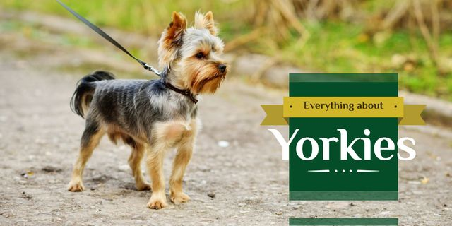 Yorkshire Terrier Dog on a Walk Twitter – шаблон для дизайна