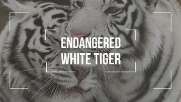 Endangered Animals White Tigers